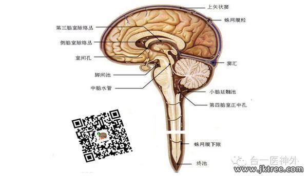 大脑树图片素材