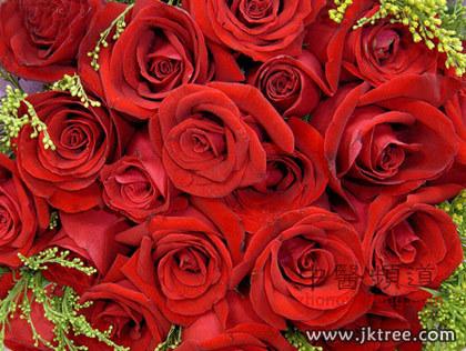 健康树首页 女性 女性护理  一说起玫瑰花来,人们想到的都与爱情有关